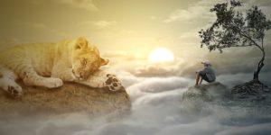 日の出とライオン